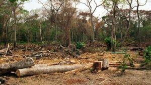 deforestacio